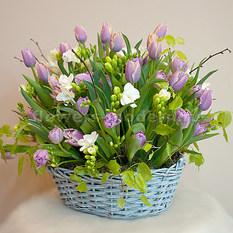 Корзина К050 из тюльпанов и фрезий
